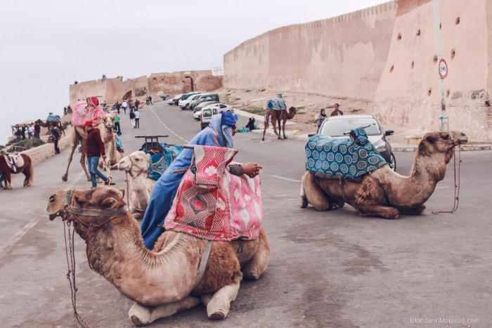 camel morocco kasbah view