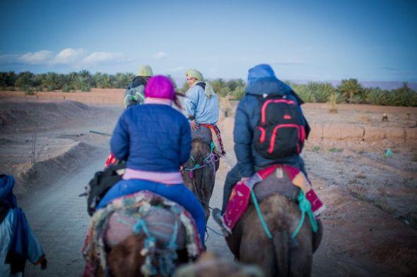 camels, desert, morocco, people, sand