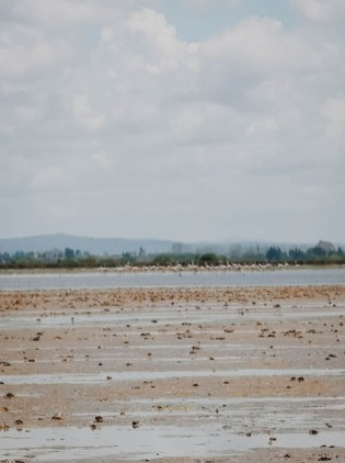 beach morocco sand water birdwatching flamingos