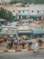 Moulay Idriss donkeys morocco market