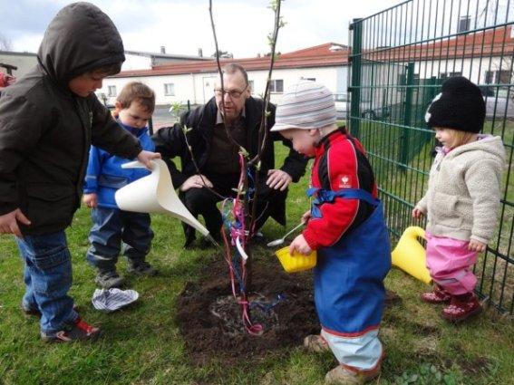 Baum pflanzen_3