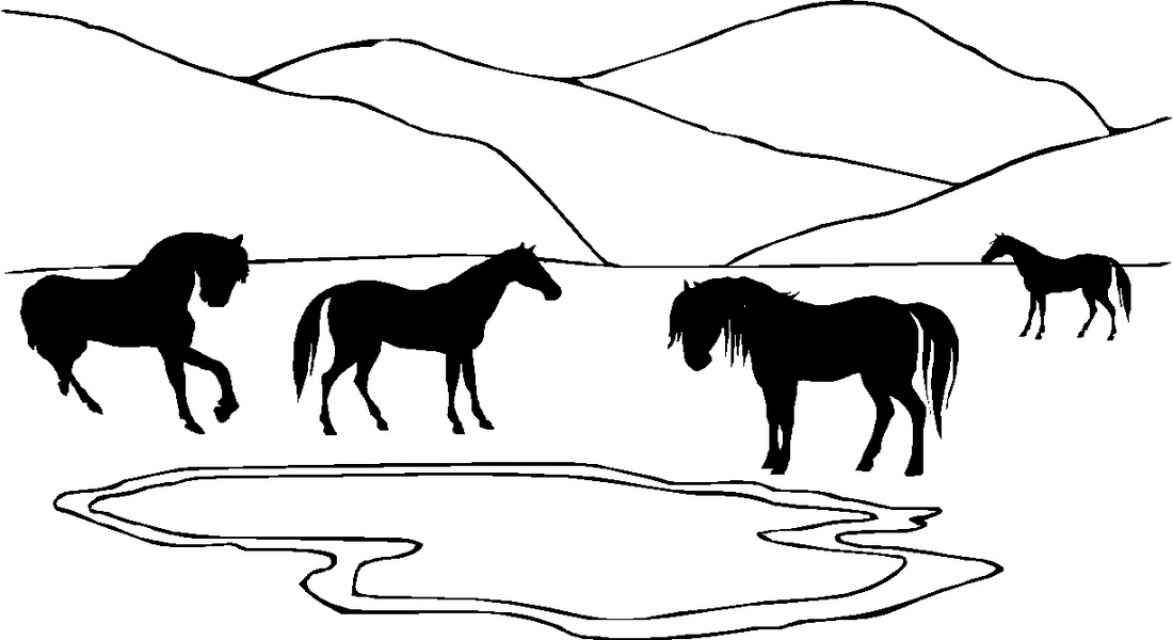 horses in valley,#737rbd,