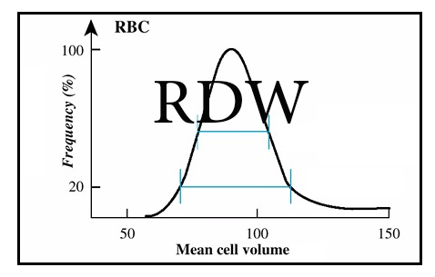 What is RDW in CBC Blood Test?