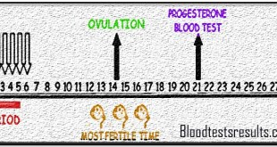 Normal Progesterone Levels After Ovulation (Day 21 Progesterone Level)