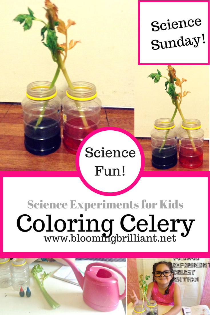 Simple Science Experiment for Kids- Coloring Celery
