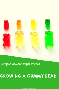 Simple Science Experiment for Kids- Growing a gummy bear