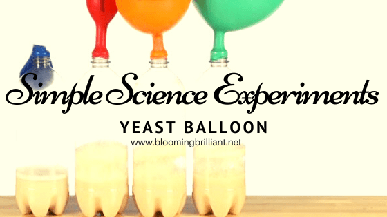 Yeast Balloon Experiment. Simple and Fun Science Experiments for Kids.