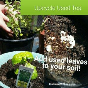 Organic Tea Compost