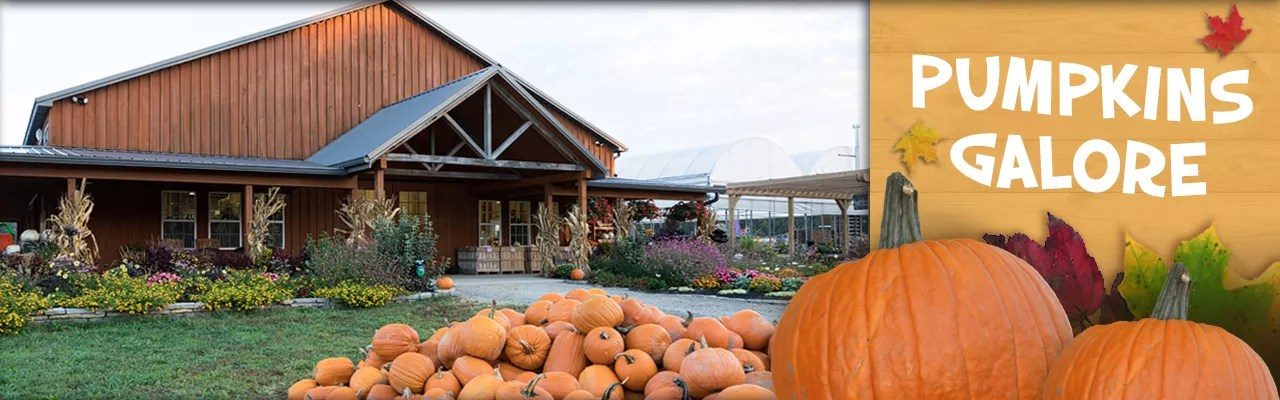 Explore our huge pumpkin patch and tons of family fun activities!