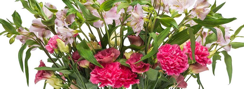 Lieferung Zahlung Bloomy Days Blumenversand