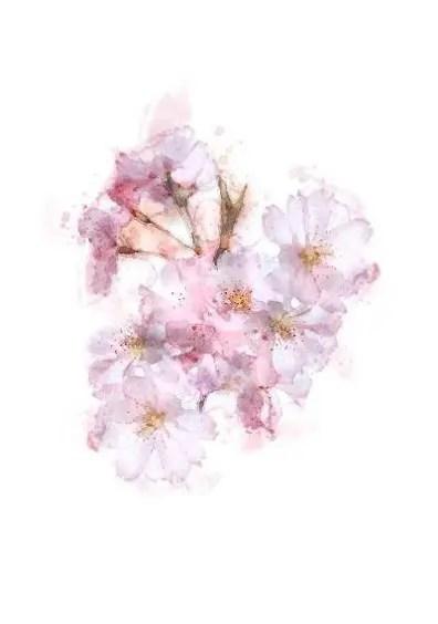 blossom card pink