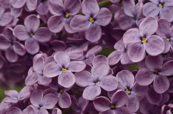 boxed flower bouquet purple 1