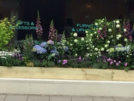 Chelsea window box