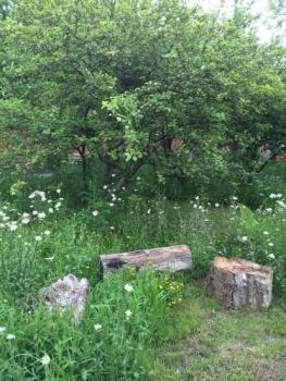 Wildflower meadow and orchard East Lothian
