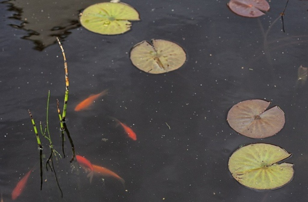 Contemporary_pool_with_fish