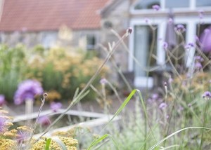 Rural_garden_design_Haddington