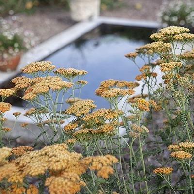 reflective_pool_Haddington