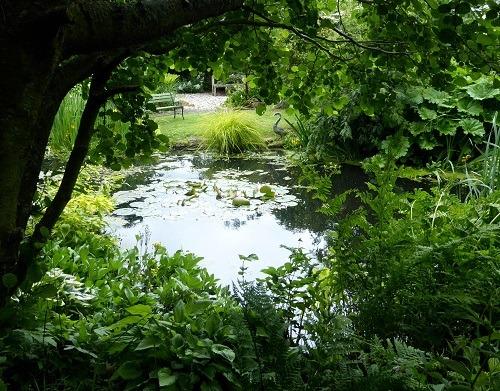 Natural_wildlife_pond