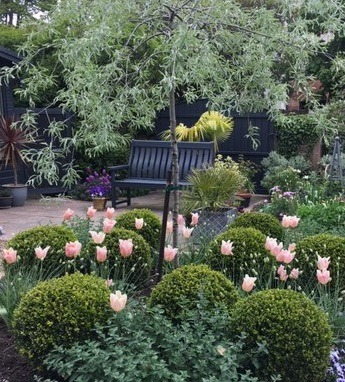 Front garden planting scheme