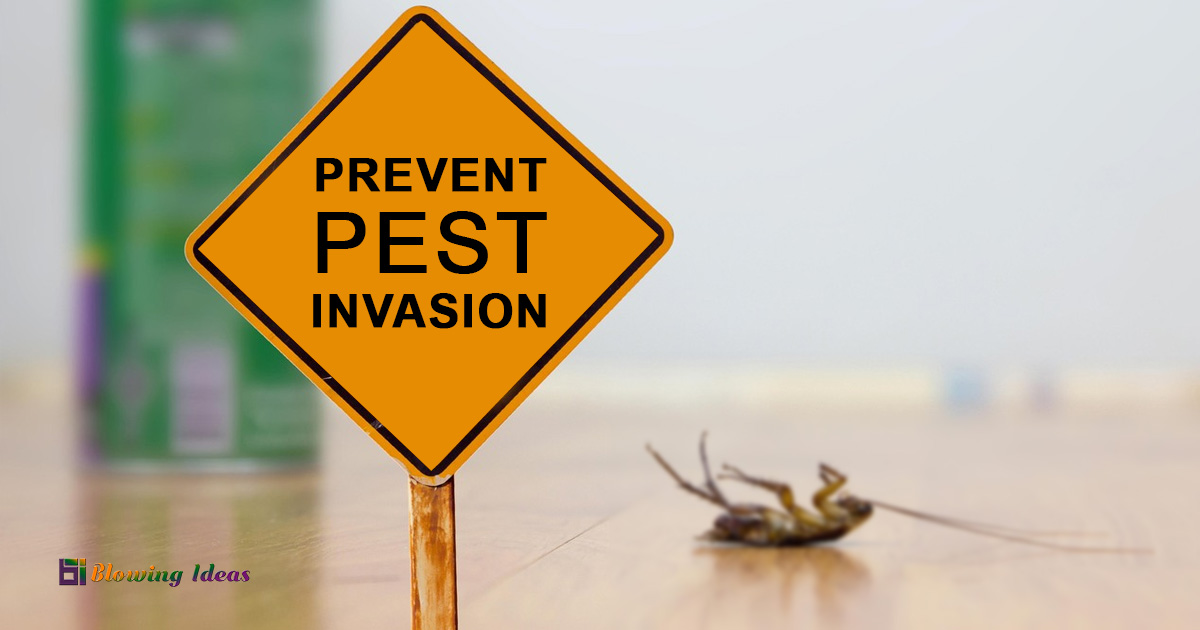 Top 6 Tips That Can Help You Prevent Pest Invasion In Your Home
