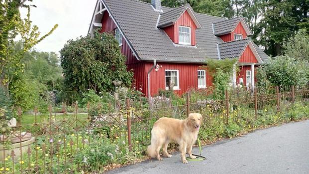 Schöne Holzhäuser am Wittensee, 5 km nördlich von Sehestedt