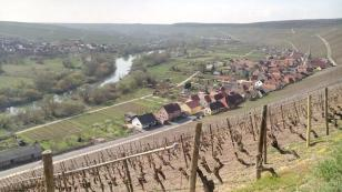 Kloster Vogelsburg – Doxi im Weinberg