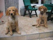 Bellis (l.) und Brisko (r.) nach vier Monaten