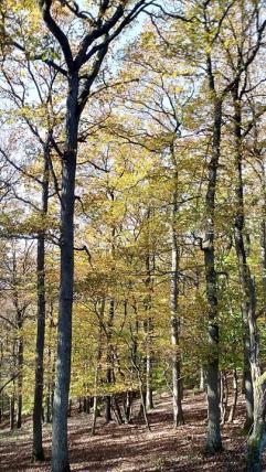 Im bunten Herbstwald