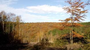 Eine Mauer aus Wald vor uns