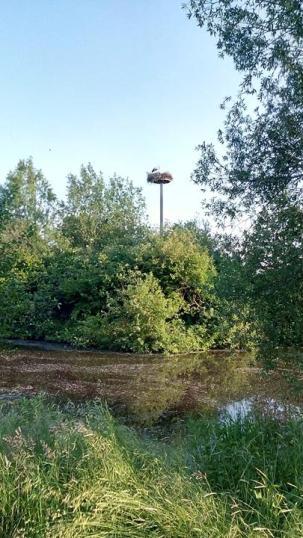 Storchennest in der Nähe des Womo-Stellplatzes