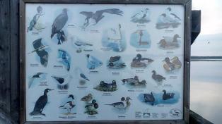 Reiche Vogelwelt am See