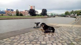 Die Geest fließt durch Bremerhaven und mündet hier in die Weser