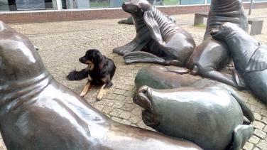 Doxi hat neue Freunde gefunden