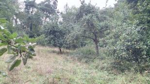 Apfelbäume entlang des Weges