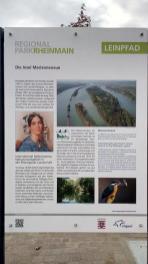 Infotafel zur großen Rheininsel Marianenaue, die den Strom hier teilt