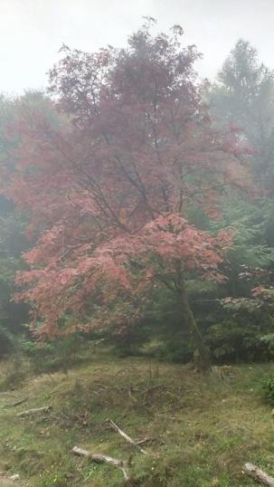 Rot und nebelig kündigt sich der Herbst an