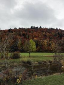 Der Stadtwald von Tiengen hinter der Wutach