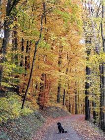 Wald um die Küssaburg