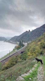 Beim Abstieg vom Loreleyfelsen hinunter nach St Goarshausen