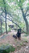 Doxi vor einem Aussichtspunkt im Wald