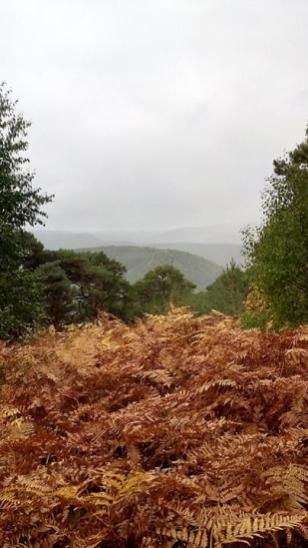 Blick vom Nollenkopf auf die westlich gelegenen Höhen des Pfälzer Waldes