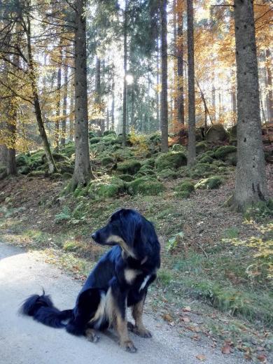 Doxi liebt es im Wald