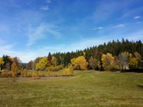 Weideflächen zwischen den Hochmooren