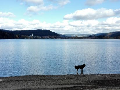 Blick vom Südrand des Sees auf den Ort Titisee