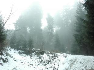 In den Höhenlagen oberhalb des Bannwaldes liegt noch Restschnee