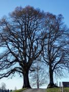 Ich fotografiere einfach gerne Bäume :)