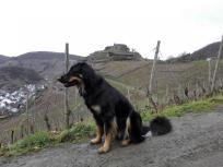 Im Hintergrund die Ruine der Saffenburg