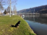 Doxi an unserem Stellplatz am Neckar