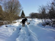Links und rechts der schmalen Holzstege versinkt man sofort knietief im Schnee