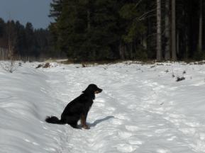 Doxi starrt in den Wald. Was ist denn da?